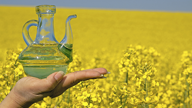 Canola Oil For Natural Hair