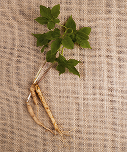 The Ancient Benefits of Ginseng Leaf Extract for Your Hair